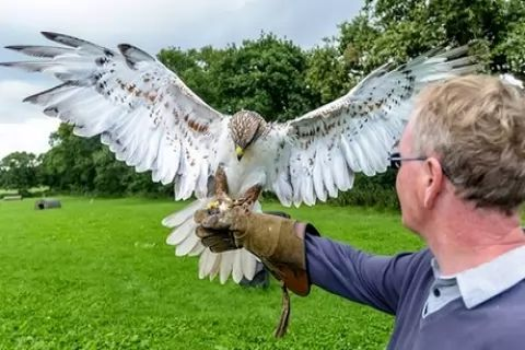 Halk Walk for One, Two, or Four People at StockleyBirds of Prey